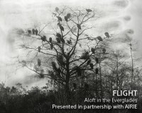 Flight:  Aloft in the Everglades